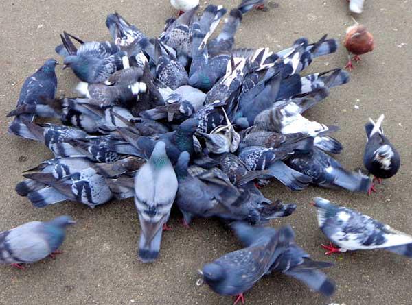 d pigeonnage nettoyage et d sinfection hygi ne volution sp cialiste du syndrome de diog ne. Black Bedroom Furniture Sets. Home Design Ideas